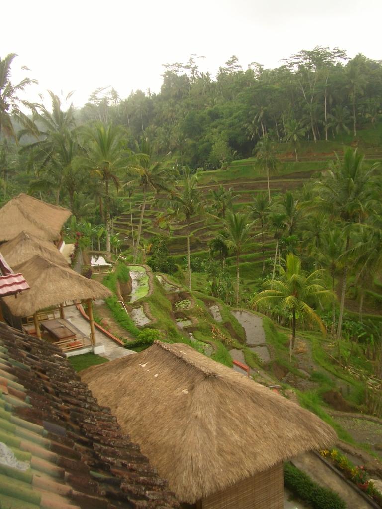 Bali 23/06/08 - Terrazas de Arroz de Tegalalang