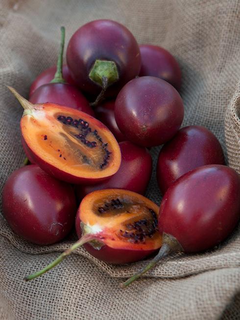 tamarillo-harvest