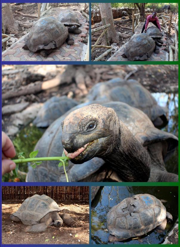 turtle_prision_island_zanzibar