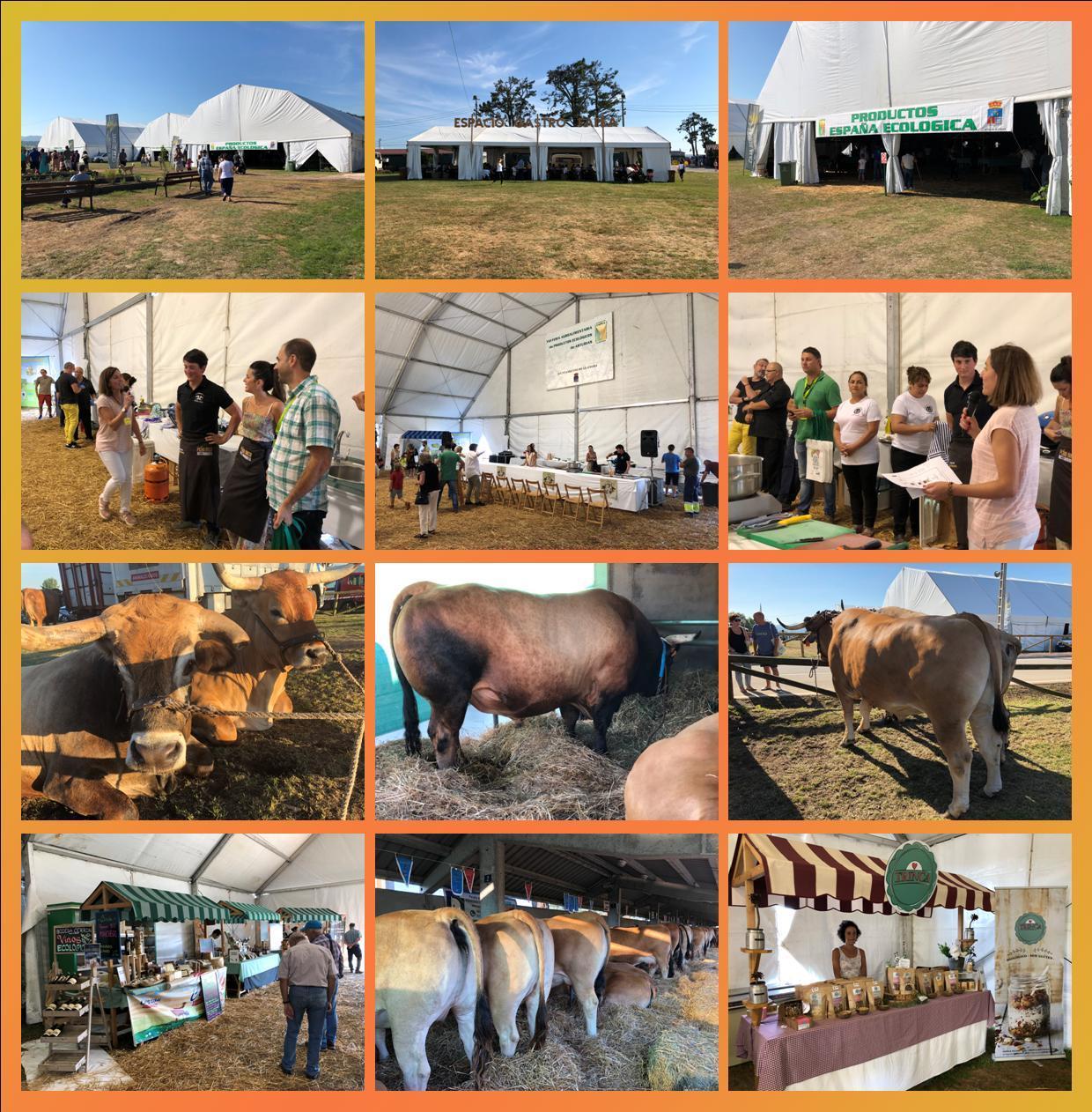 Feria Agroalimentaria de Productos Ecológicos de Asturias(FAPEA)